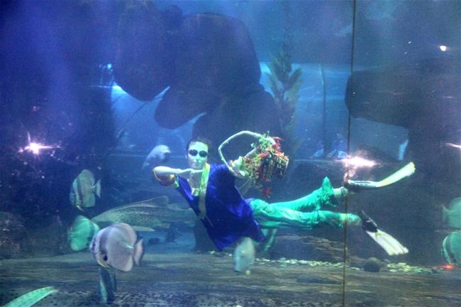 海底动物大狂欢