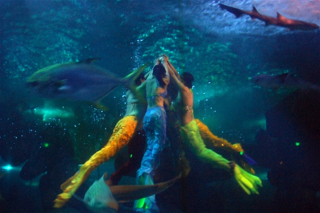 """""""粽""""享欢乐,蓬莱海洋极地世界美人鱼水下送祝福"""
